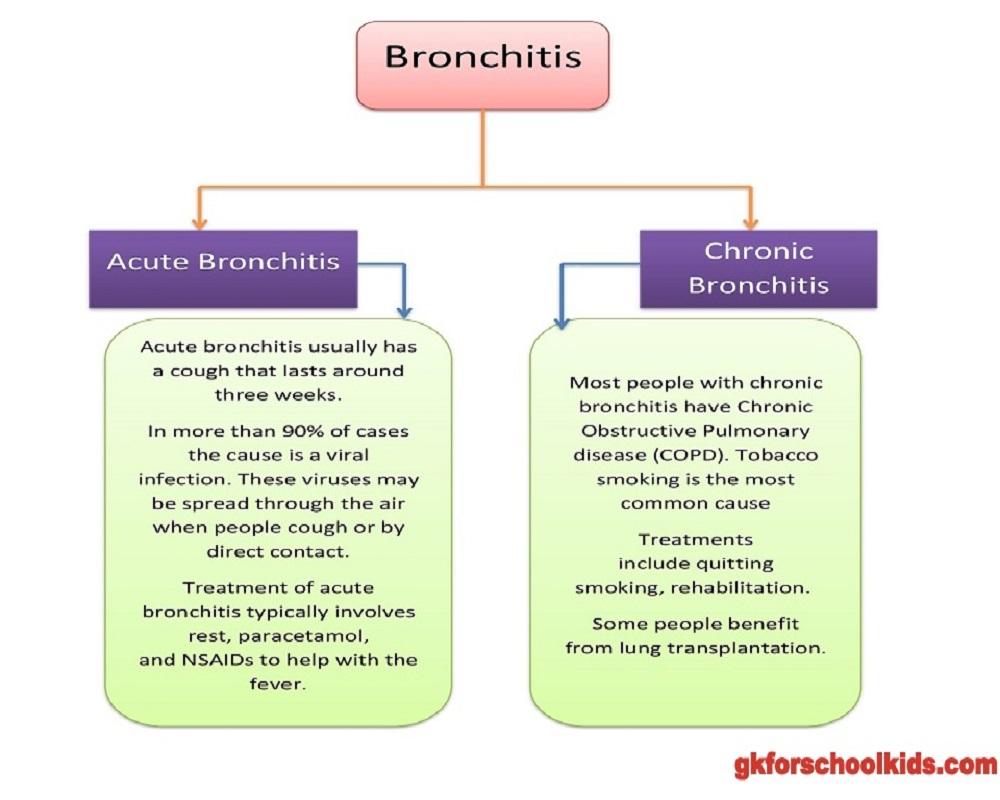 bronchi-classi