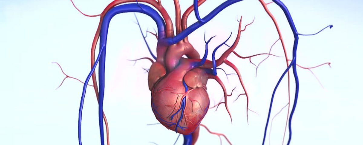 9 Amazing Facts About Human Heart Gk For School Kids