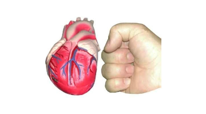 The heart and fist